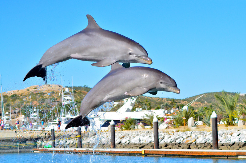 DOLPHIN DISCOVERT_1