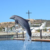DOLPHIN DISCOVERT_3
