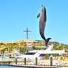 DOLPHIN DISCOVERT_4