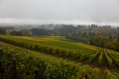Rainy autumn day at one of the vineyards in Oregon.