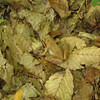 cute toad, well camoflaged
