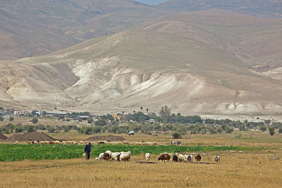 West Bank with shepherd