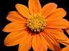 orangeonblackwp