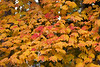 Fall Leaves Wallpaper 1