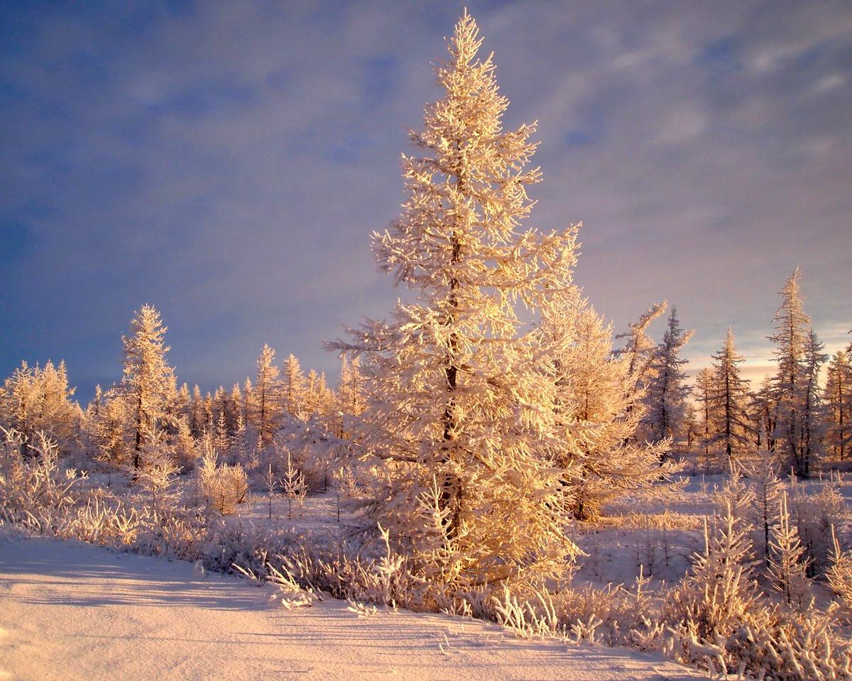 winter 14 b