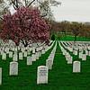 Arlington Cemetery II