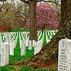 Arlington Cemetery I