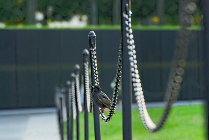 Winged Visitor - Vietnam Veterans' Memorial