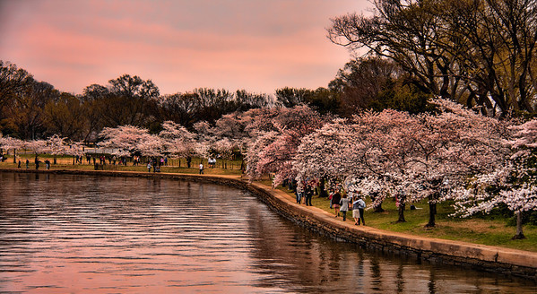 Tidal Basin at Cherry Blossom Time