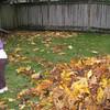 Lots of raking to make a pile