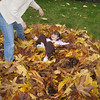 Piles of leaves are lots of fun