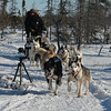 dog sledding in Churchill while waiting for the train
