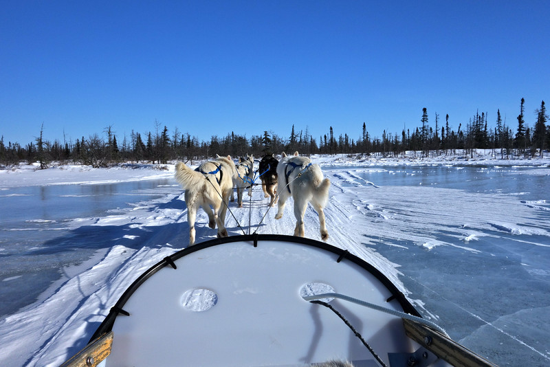 dog sled ride in Churchill