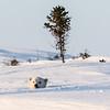 polar bear cub checking out the world