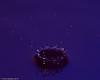 water_drops-DSC_1253