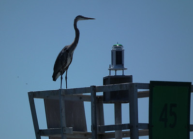 The Egret watches from up high.