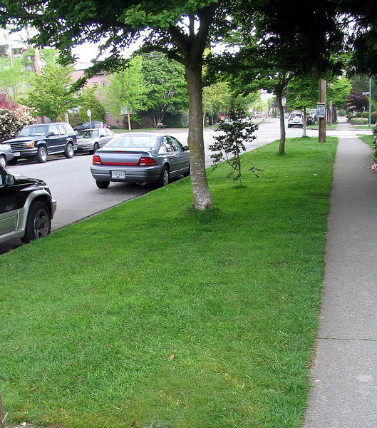 We take care of our neighbour's boulevard lawn. After mowing we leave the clipping on the lawn to provide moisture.