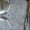 292/365 - Egret