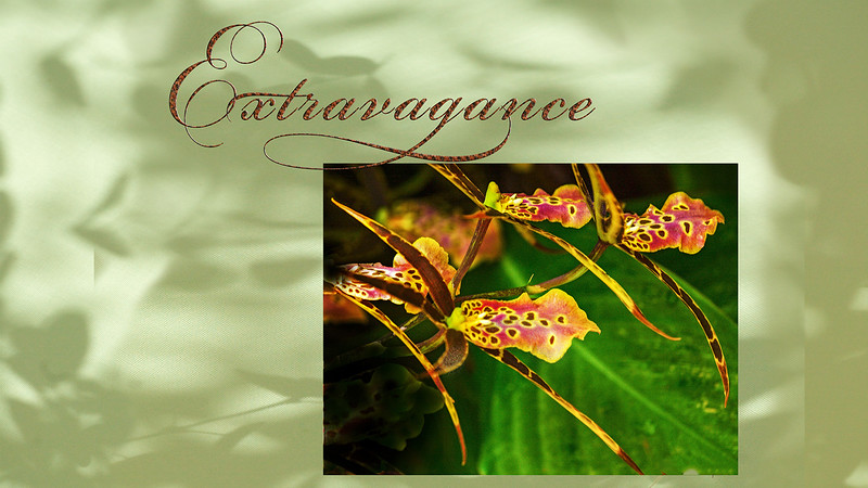 Extravagance IV video