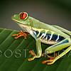 Costa Rica video website