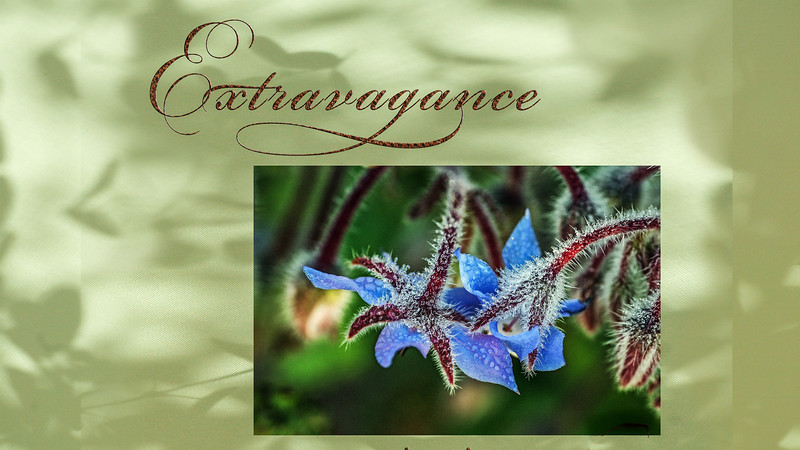 Extravagance III video