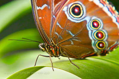 When we normally see a butterfly, we see a  fluttering, colorful insect.  We don't have time or ability to see and appreciate the small details that make up this small creature.  We look at the whole and take for granted the number of small components which all work together to make a colorful flying insect.