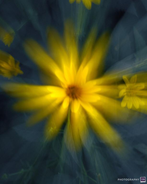 Flower Window