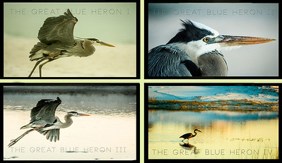 hERON VIDEO BLOG IMAGES