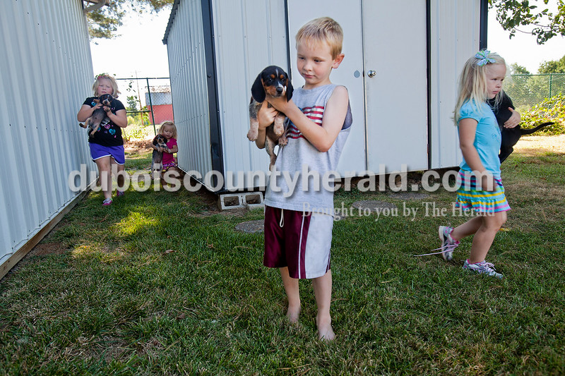 Rachel Mummey/The Herald<br /> Maddox Schnell of Celestine, 7, took a look at one of the beagle puppies his family breeds along with his sisters, Corbyn, 8, left, Kinley, 2, and Raynie, 4, right, as they got them out to play at their grandpa's house in Jasper on Tuesday morning. Their grandpa, Tony Merder of Jasper, sells produce from Gibson County out of his home on Mill Street and the children were there to help.