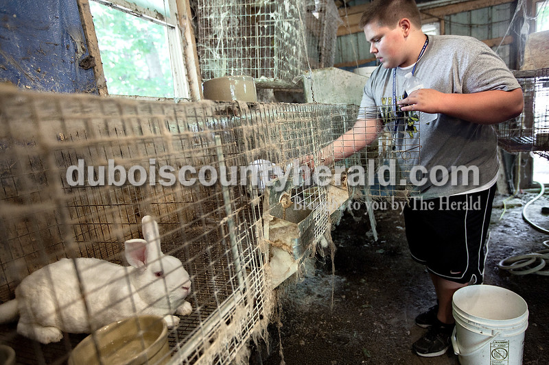 Dave Weatherwax/The Herald<br /> Ted Boeglin of Jasper, 15, placed frozen water bottles in each of his rabbit cages to help the animals cope with the triple digit temperature last Friday. The rabbits breath the cool vapor from the bottles through their nose which helps them to cool their body temperature.