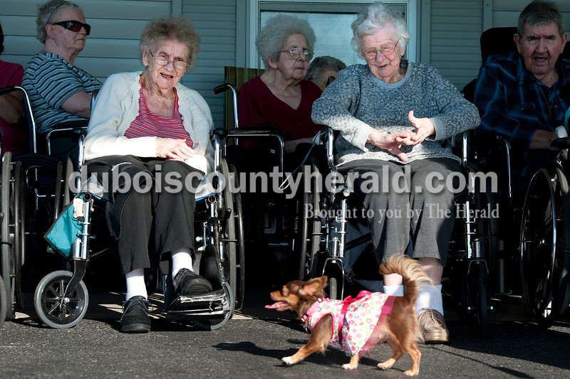 Olivia Corya/The Herald<br /> Residents Anna Fleck, left, and Lucille Schwartz watched Bella, a long-haired chihuahua, during the annual dog show at Scenic Hills Care Center in Ferdinand on Tuesday evening. About a dozen volunteers from the community showed up to parade their pooches for the residents' viewing pleasure.