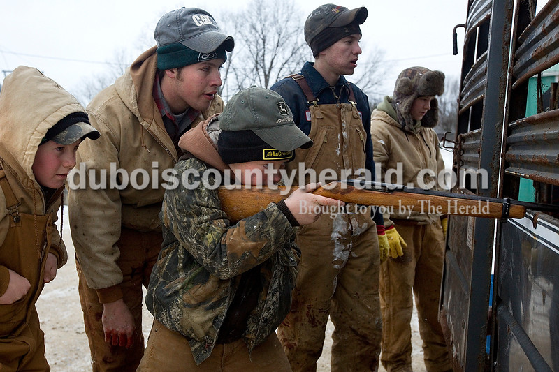Logan Niehaus of Ireland, 12, center, took aim at one of the pigs with a .22-caliber rifle as his cousins Jared Schwenk of Jasper, 12, left, Travis Main of Ireland, Chase Schwenk of Jasper, 16, and family friend Brian Schmitt of Ireland watched. Most of the young men took a turn at shooting a pig. Dave Weatherwax/The Herald