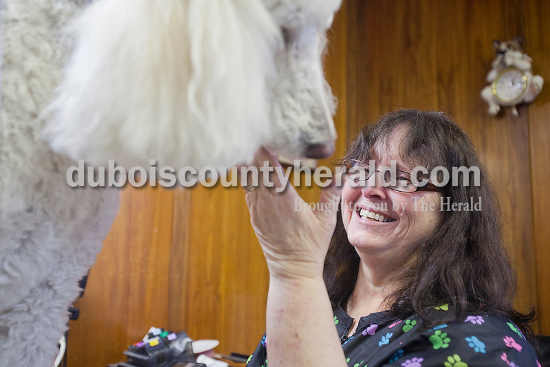 Rachel Mummey/The Herald<br /> Charlotte Weeks of Cuzco laughed after getting a wet nose in her face by standard poodle P.J., owned by Cindy Bies of Jasper, while giving him a trim at U Lucky Dog Grooming in Jasper on Wednesday afternoon. Weeks said she has a group of regulars who come in for routine shampoos, trims and nail clippings.