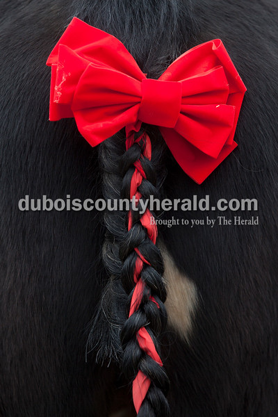 Olivia Corya/The Herald<br /> A holiday ribbon lay intertwined with the tail of Jazz, a mare, during Christmas for St. Jude, an equestrian based fundraiser for the children's hospital, at Briar Bush Farm in Celestine on Saturday. The event, which also featured a petting zoo and finger painting a real horse, was organized by Luckie Hopf and took place on her sister Ruth Bush's property.