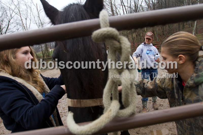 Olivia Corya/The Herald<br /> Madison Giesler of Jasper, 12, left, Erica Thewes of Celestine, 17, and Jaylyn Giesler of Huntingburg, 11, groomed a horse named Dreamer in preparation for Christmas for St. Jude, a fundraiser for the children's hospital, at Briar Bush Farm in Celestine on Saturday. The event, which featured horse rides around a holiday decorated barn, was organized by Luckie Hopf and took place on her sister Ruth Bush's property.
