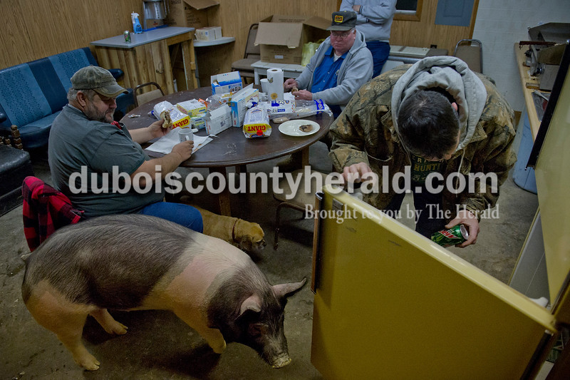 Matthew Busch/The Herald<br /> Billy Lang of Birdseye grabbed a soda from the refrigerator at Wilson Livestock in Huntingburg as Blackie the hog roamed around the breakfast table alongside Mark Welp of St. Meinrad, left, Jim Dilger of Ferdinand, second left, and Louis Cary of Jasper, not pictured top, Monday morning as they cooked up sausage sandwiches. Cary decided to keep Blackie and another hog, Spot, when they arrived at Wilson too sick to transport 2 months ago. Cary nursed them back to health and has kept them at the yard ever since as kinds of pets. He does plan to sell them, however, in the near future.