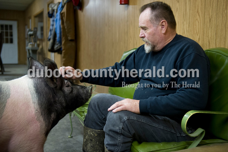 Matthew Busch/The Herald<br /> Mark Houchin of Birdseye pet Blackie the hog after feeding her a peppermint as he joined friends and co-workers for breakfast Monday morning at Wilson Livestock in Huntingburg.