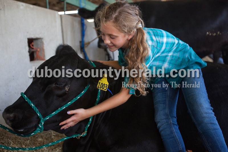 Annie Brake of Jasper, 11, pet her cow named Joy to pass the time in the cattle barn during the Dubois County 4-H Fair on Sunday. Rachel Mummey/The Herald