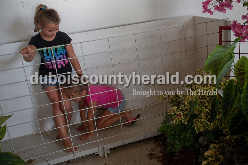 Ashlynn Dilger of Ferdinand, 7, and her sister Hattie, 6, pretended to be the owner of champion pig and a champion pig, respectively, in the swine barn at the Dubois County 4-H Fairgrounds on Sunday. Rachel Mummey/The Herald