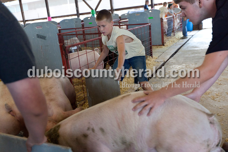 Caden Betz of St. Anthony, 10, left, helped Travis Wehr of Ireland, 16, direct Travis' pigs to their pens during check in at the Dubois County 4-H Fairgrounds on Saturday morning. Dave Weatherwax/The Herald