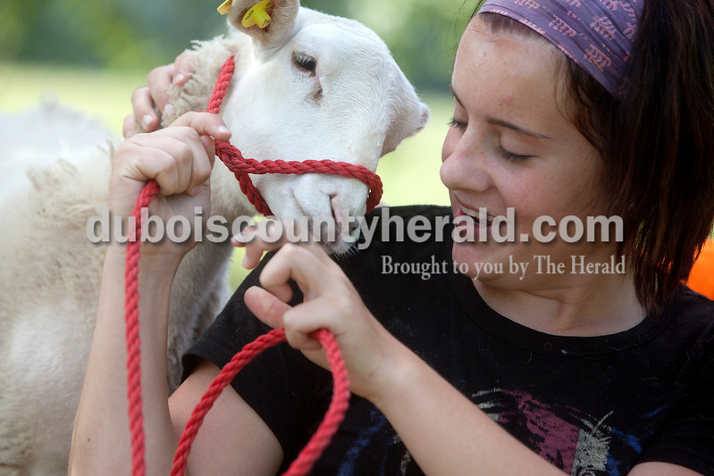 Tabitha Bolte of Ferdinand, 17, tried to fix the halter on one of her sheep at the Dubois County 4-H Fairgrounds on Saturday morning. Dave Weatherwax/The Herald