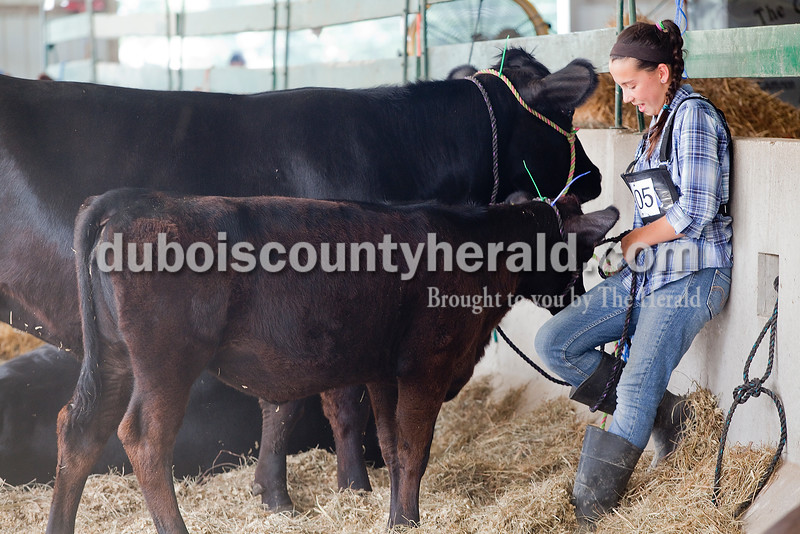 Abby Fischer of Ferdinand, 11, talked with her calf named Clover in the cattle barn at the Dubois County 4-H Fairgrounds on Sunday. Rachel Mummey/The Herald