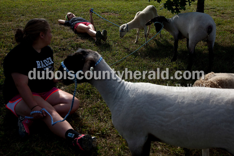 Chloe McNeely of Huntingburg, 14, left, and Sophia Bolte of Ferdinand, 17, rested outside of the barn with their sheep as they grazed on the grass Saturday morning at the Dubois County 4-H Fairgrounds.  Dave Weatherwax/The Herald