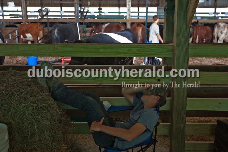Having started his day at 5 a.m. on Saturday morning, by 10 a.m. Collin Kissel of St. Henry, 16, was ready to take a nap in the sheep and goat barn at the Dubois County 4-H Fairgrounds. Dave Weatherwax/The Herald