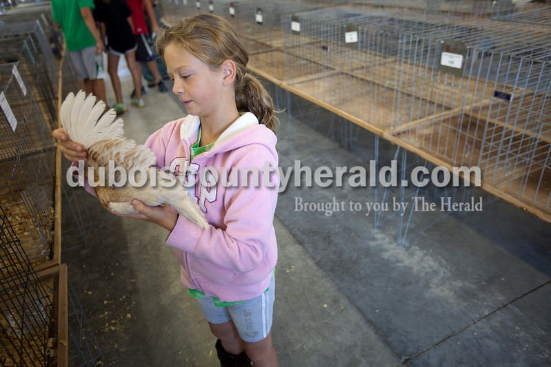 Katie Stenftenagel of Ireland, 10, examined the wings of her red pyle bantam chicken at the Dubois County 4-H Fairgrounds on Saturday morning before putting it in its cage. Dave Weatherwax/The Herald