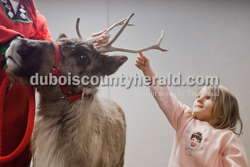 Mya Uebelhor of Huntingburg, 4, reached up to touch the antler of the reindeer named Clarice during a presentation by the Silly Safari's Indiana Reindeer Reserve based out of Indianapolis at the Huntingburg Public Library on Tuesday. Other arctic animals such as rabbits, frogs and snakes made appearances as well as Santa and Mrs. Claus. Nearly 160 people attended the event. Rachel Mummey/The Herald