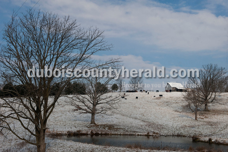 Carolyn Van Houten/The Herald<br /> Cattle grazed on the grass beneath the snow on a farm at the intersection of County Road 650W and County Road 100S on Tuesday Morning.