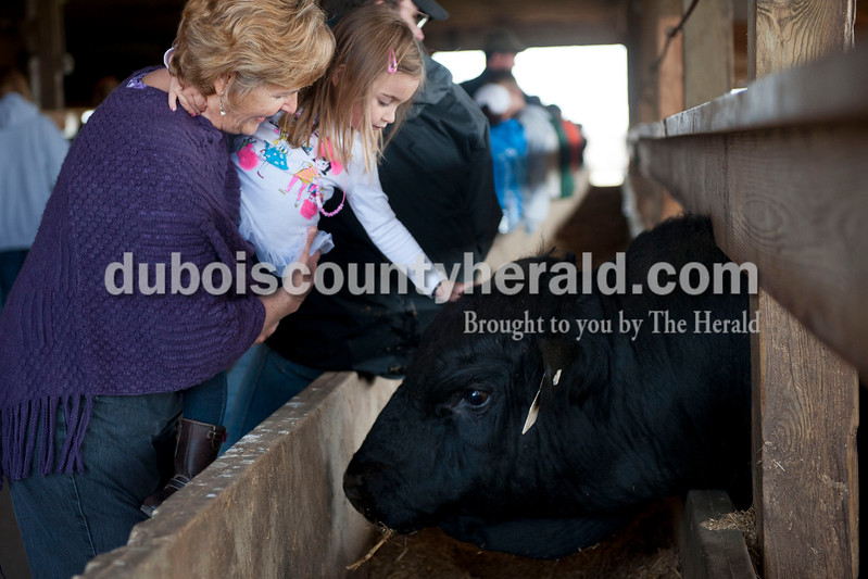 Carolyn Van Houten/The Herald<br /> Marcia Austin of Birdseye held her granddaughter Ava Calvert of St. Louis, 5, while she pet a bull during J&D Kerstiens Gelbvieh Going to Grass Bull Sale in Huntingburg on Saturday.  They auctioned 27 bulls during the sale.