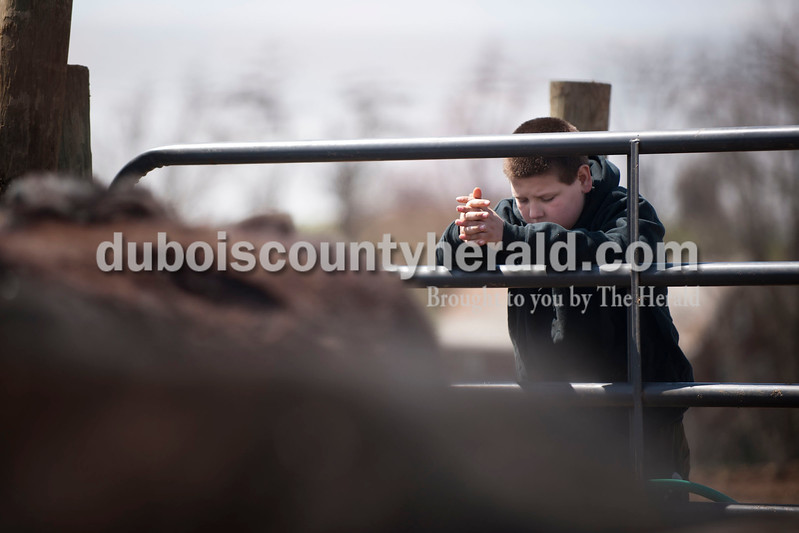 Carolyn Van Houten/The Herald<br /> Cameron Barkley of Huntingburg, 12, watched a hose fill a water trough for the heifers during J&D Kerstiens Gelbvieh Going to Grass Bull Sale in Huntingburg on Saturday.  They auctioned 27 bulls during the sale.
