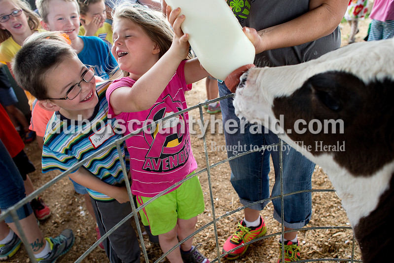 Dave Weatherwax/The Herald<br /> Ireland Elementary School kindergartner Ryder Cartwright, left, laughed when classmate Emerson Bush was hit with slobber while bottle feeding a 2-month-old calf named Domino during a field trip Tuesday afternoon at the Huntingburg dairy farm owned and operated by Darren and Sam Schwoeppe. The farm was the last stop for 93 of the school's kindergartners that took a trip to Welp's Farm and Greenhouse in Birdseye and then to Huntingburg City Park for lunch before the farm.